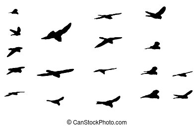 Birds silhouettes - This is collection of black bird...