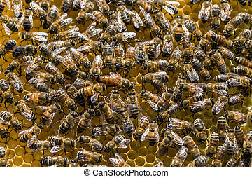 Queen bee is always surrounded by the workers