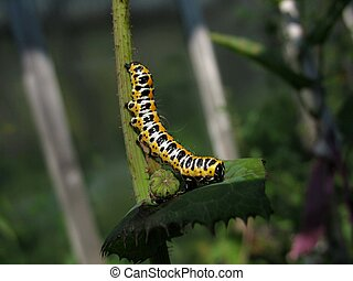 caterpillar - The bright caterpillar on steam of a plant