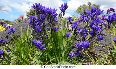 Purple flowers blossoming in the spring.