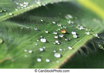 water drops on a green leaf. morning dew