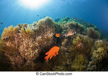 Catalina Reef - A beautiful reef scene in Catalina
