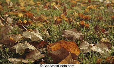 Background of autumn leaves in the park