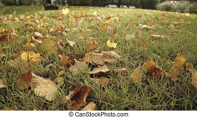 Background of autumn leaves in the park - Background of...