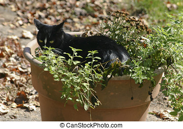 Black Cat Chilling in the Catnip - A guilty looking black...