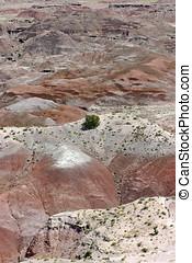 tenaz, pintado, deserto, coloridos, Vegetação