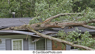 Tree Caves in a House Roof - A large oak tree falls on and...