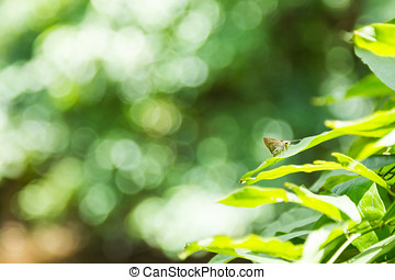 White Admiral Butterfly perched on a leaf. - White Admiral...