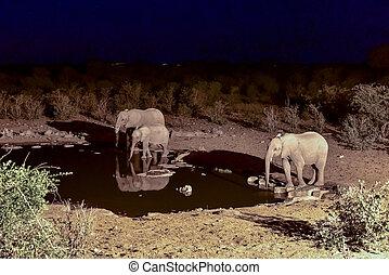 Watering Hole - Etosha, Namibia - Elephants at the Halali...