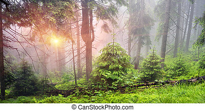 Misty forest in the mountains