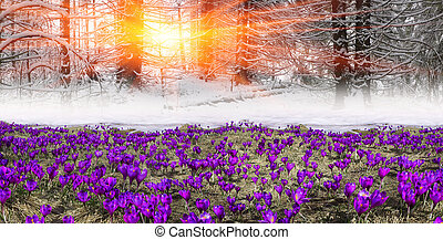 Tale with crocuses - Fantastic landscape, symbolizing the...