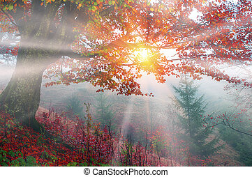 autumn mist - Early morning in the forest after a heavy...