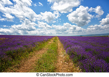 Landscape with the road, in the field of the blossoming...