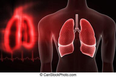 humano, Pulmones