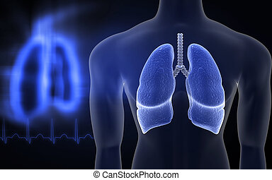 humano, lungs, ,