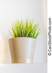 Plant in a flower pot. - Plant in a flower pot on the floor...