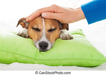 sick ill dog - owner petting his dog, while he is sleeping...