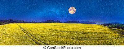 Yellow rapeseed field under a bright - Juicy rape field...