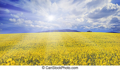 rapeseed field - In May, Kyiv, Ukraine, blooming lilacs in...