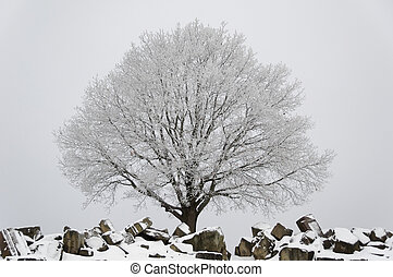 Winter scenario - tree and ruins - Snow and ice covered tree...