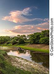 Landscape of Pantanal wetland