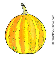 Pumpkin. Hand-drawn vegetable with stripes. Real watercolor...