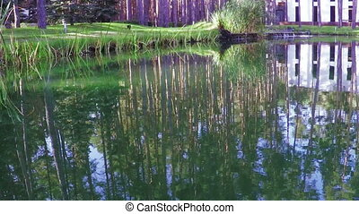 Pond in recreation area - Camera on steadicam along pond in...