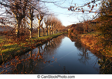 Reflection Of Nature - Reflection of plane trees on water at...