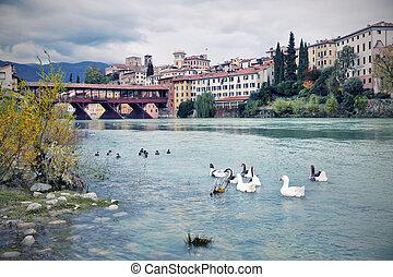 Bassano del Grappa, Veneto, Italy - Ducks in the river of...