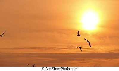 gulls in the sky at sunset 1 - gulls in the sky at sunset,...