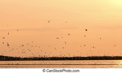 gulls in the sky at sunset over the river, slow motion
