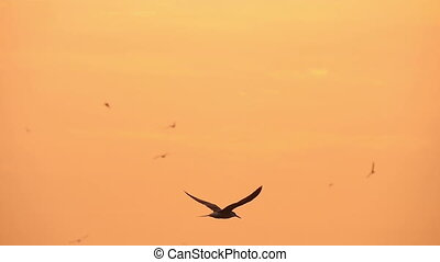gull in the sky at sunset over the river, slow motion