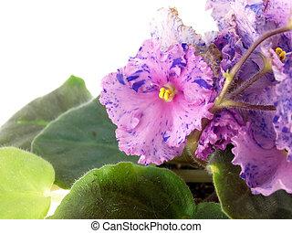 blossom, planten, binnen