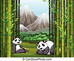 Pandas and bamboo forest illustration
