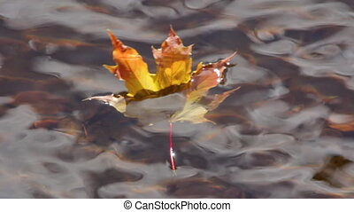 Yellow leaves float in a pond in an