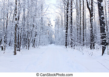 Panorama of a path - Panorama of a snow-covered path in...