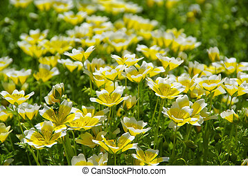 poached egg plant 11