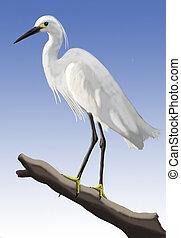 pequeno, Egret