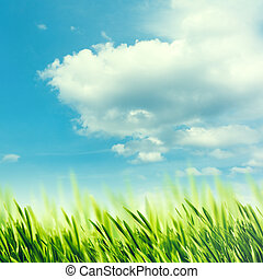 Summer rural abstract landscape with green grass under blue skies