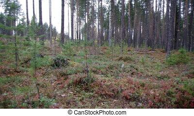 autumnal  dense forest landscape.