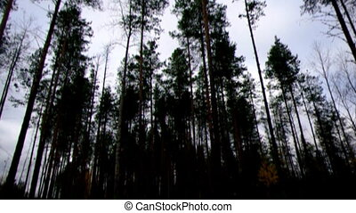autumnal  dense forest landscape.Deep Taiga Forest.Russia