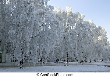 invierno, Abedul, árboles, callejón