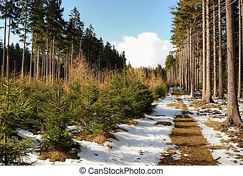 Spring landscape in Sumava - Spring landscape with snow,...
