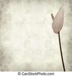 textured old paper background with exotic anthurium flower