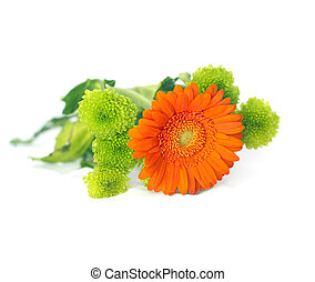 Orange Herbera with green flowers on white