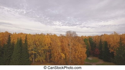 Flying above colorful autumn leaves on a trees in forest -...