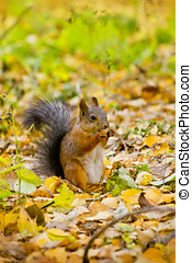 squirrel eats in the autumn forest