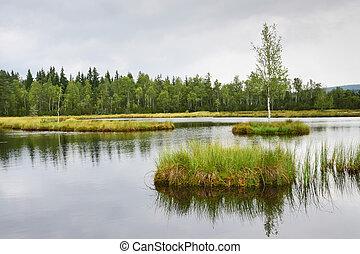Peat bog - A peat bog in Sumava, Czech Republic