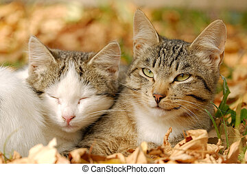 Two cats are huddled together in autumn leaves