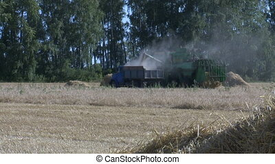 Wheat harvesting shearers 1